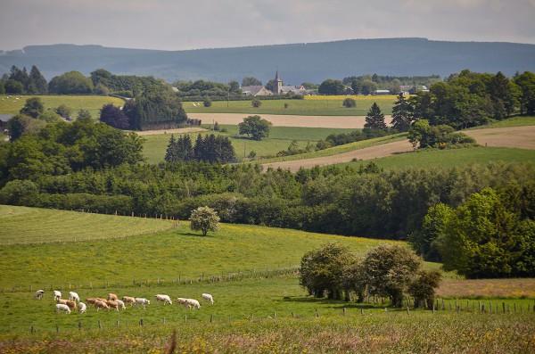 Wielerroutes in de Belgische Ardennen