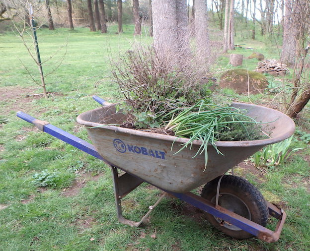 Wheelbarrow of herbs ready to plant