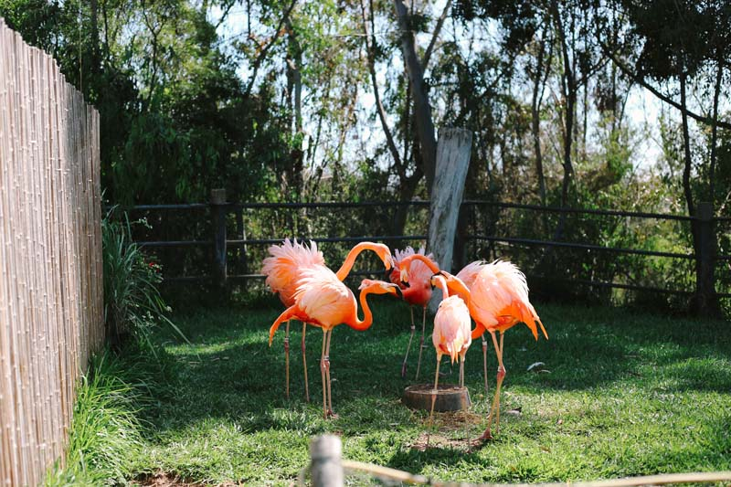 Flamingo at San Diego Zoo