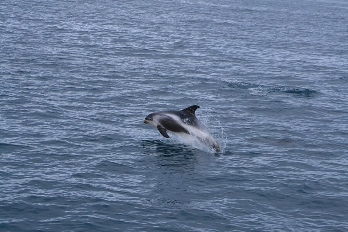 Whale Watching Holmavik – Westfjords