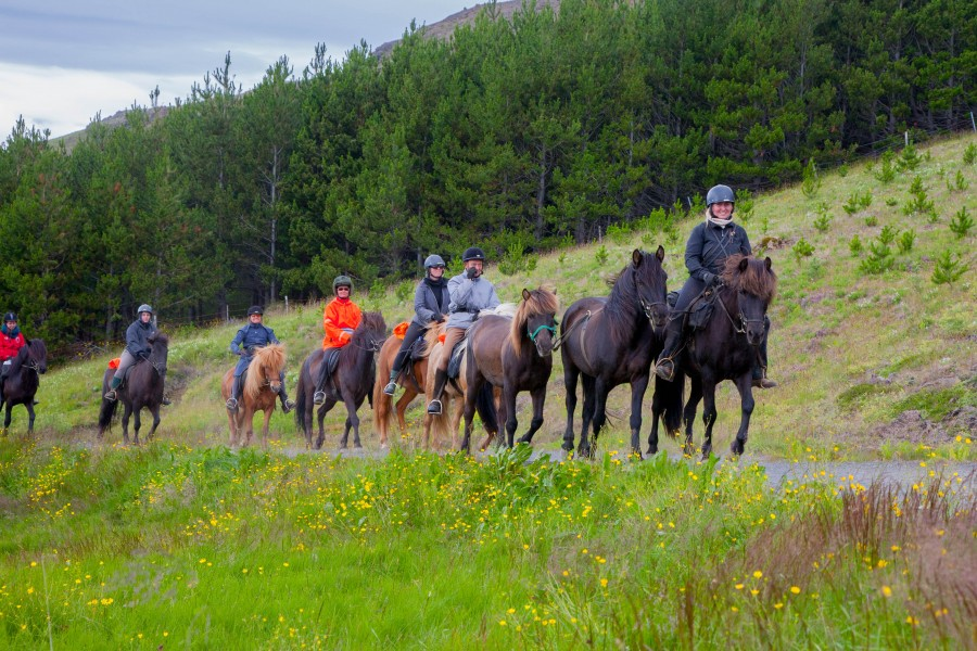 horse riding, hot springs, Iceland