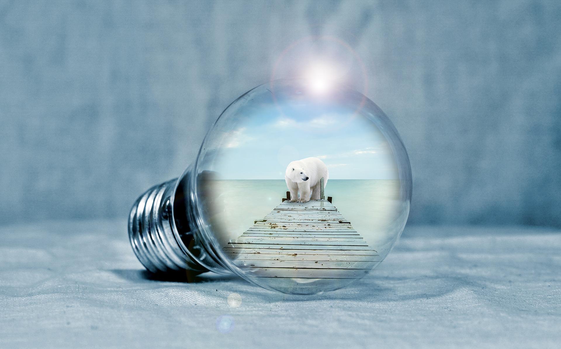 Eisbär im Licht
