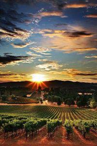 WijngaardZuid-Afrika