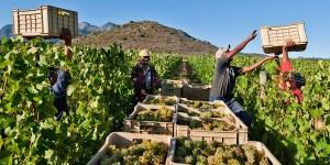 Wijnbouw in Zuid-AFrika