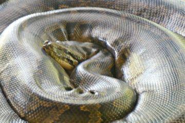 Bago Snake Pagoda
