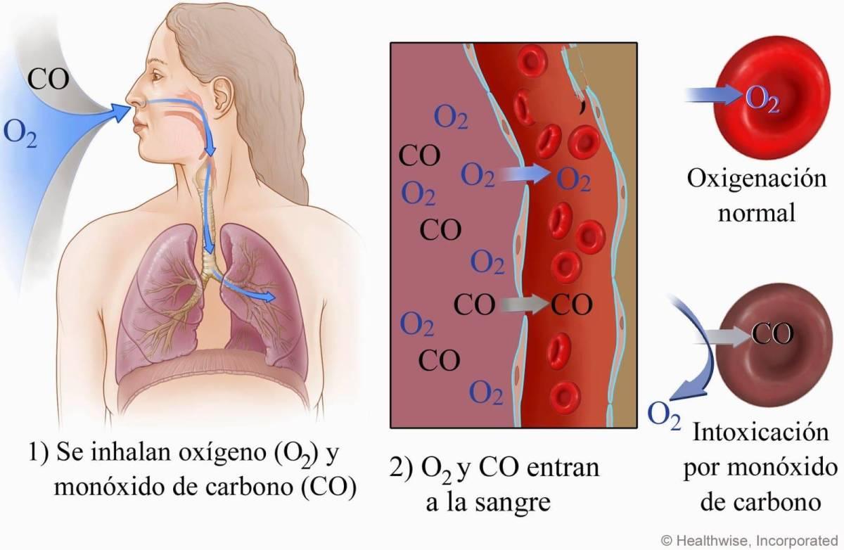 Dióxido de carbono transporte en el cuerpo humano   Wikiburrito