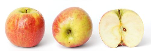 Apple and cross section