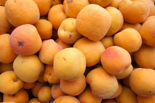 Apricots at market