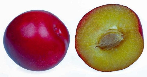 Plum fruit facts