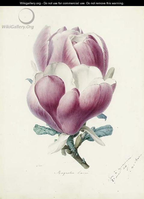 A Magnolia Flower - Alfred Riocreux