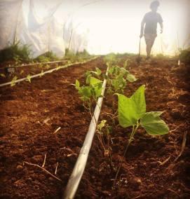 pantasema-farm-garden