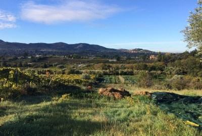 WIKI HOSTEL FAMILY pantasema farming hill view