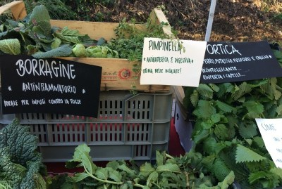 WIKI HOSTEL FAMILY pantasema farming organic veggies