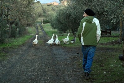 WIKI HOSTEL FAMILY pantasema zagarolo ducks and farmer