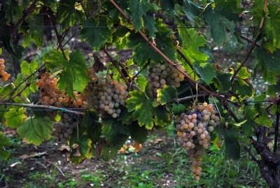 WIKI HOSTEL FAMILY pantasema zagarolo grapes