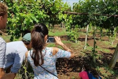 wiki-wine-tour-z-lor-4