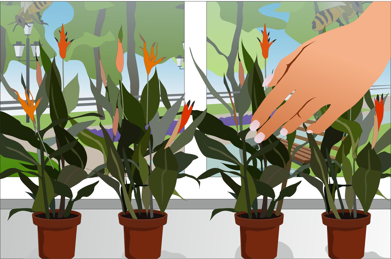 3 Ways To Pollinate Flowers