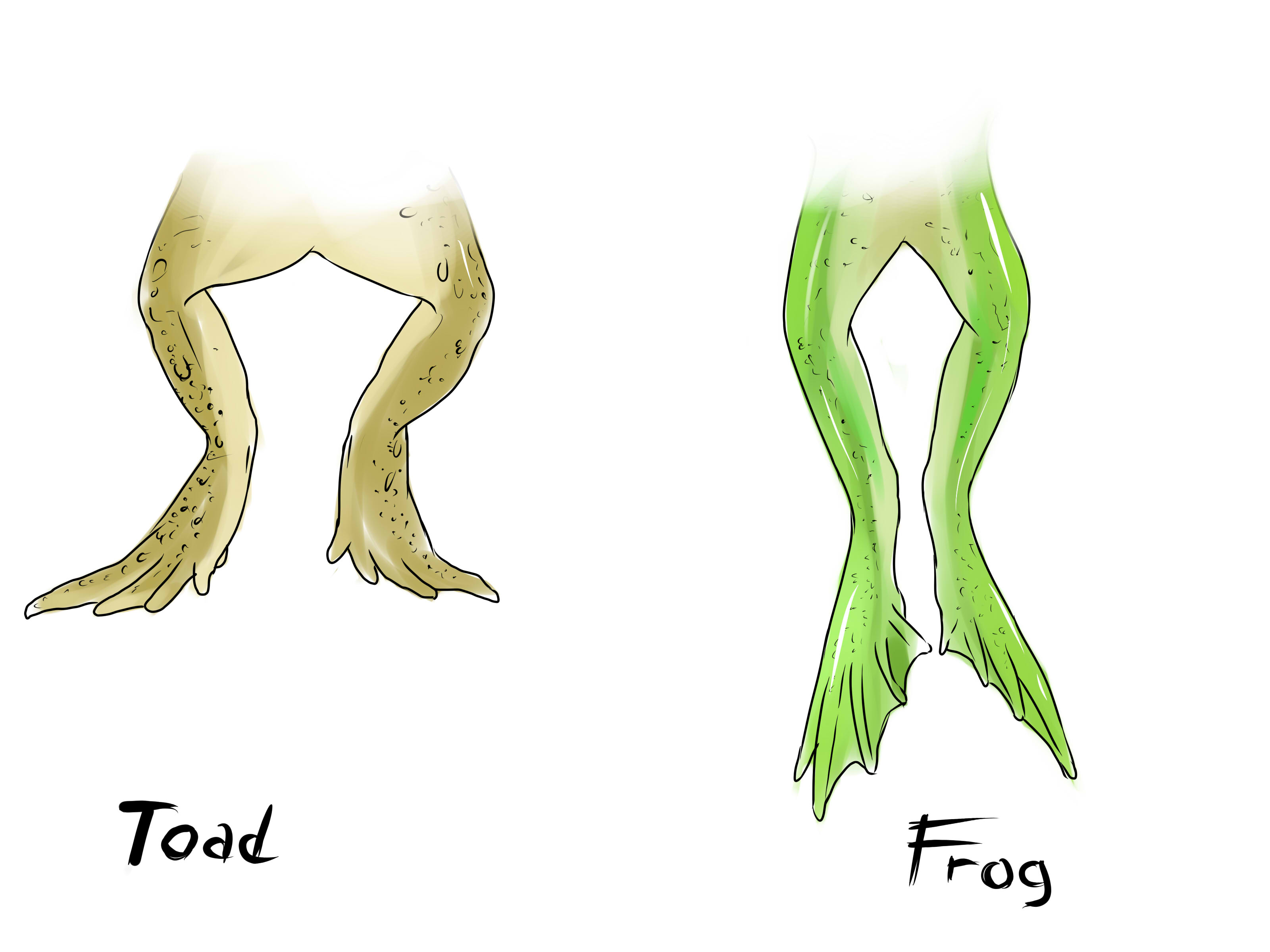 How To Tell The Difference Between A Frog And A Toad