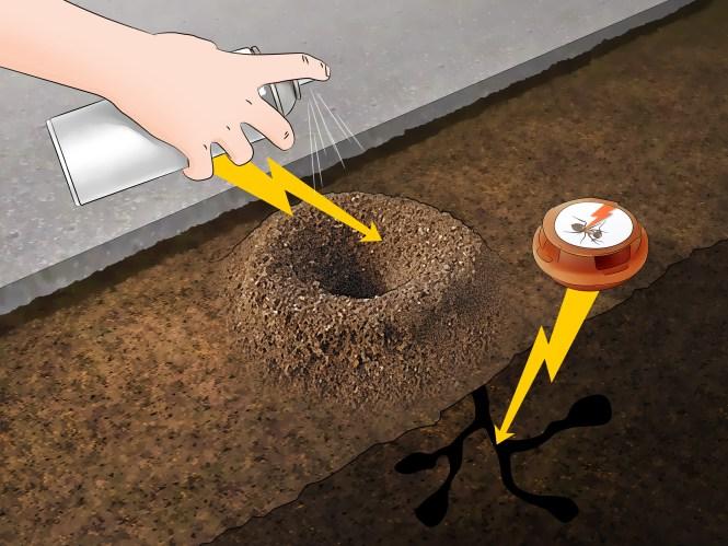 Image Titled Kill Ants Using Borax Step 2