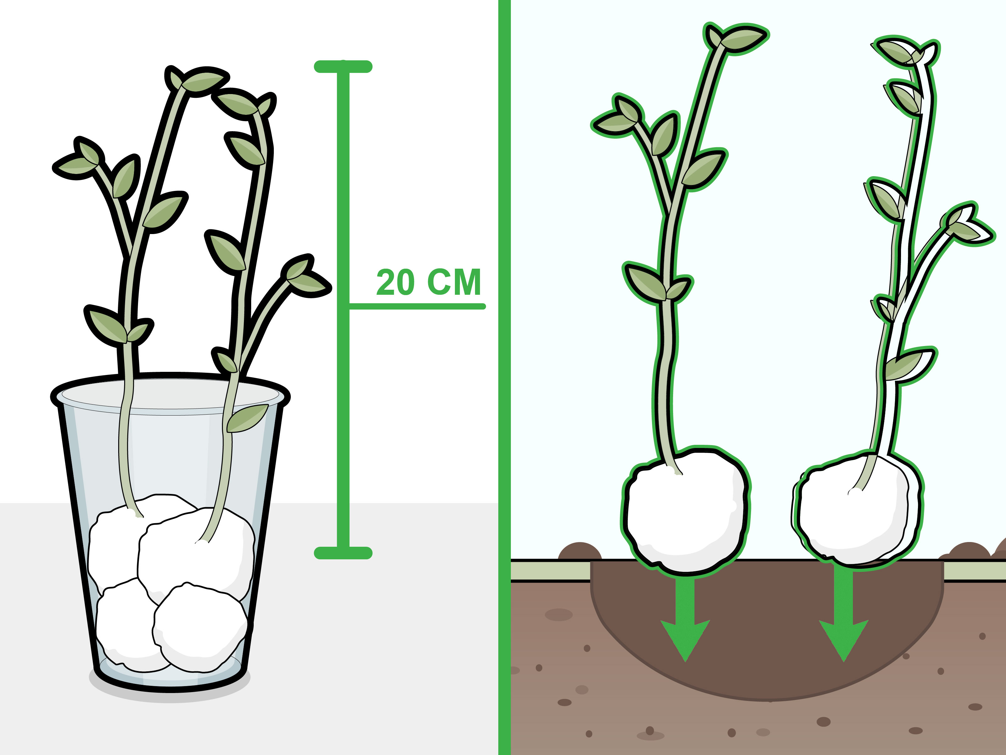 How To Grow Beans In Cotton 6 Steps With Pictures