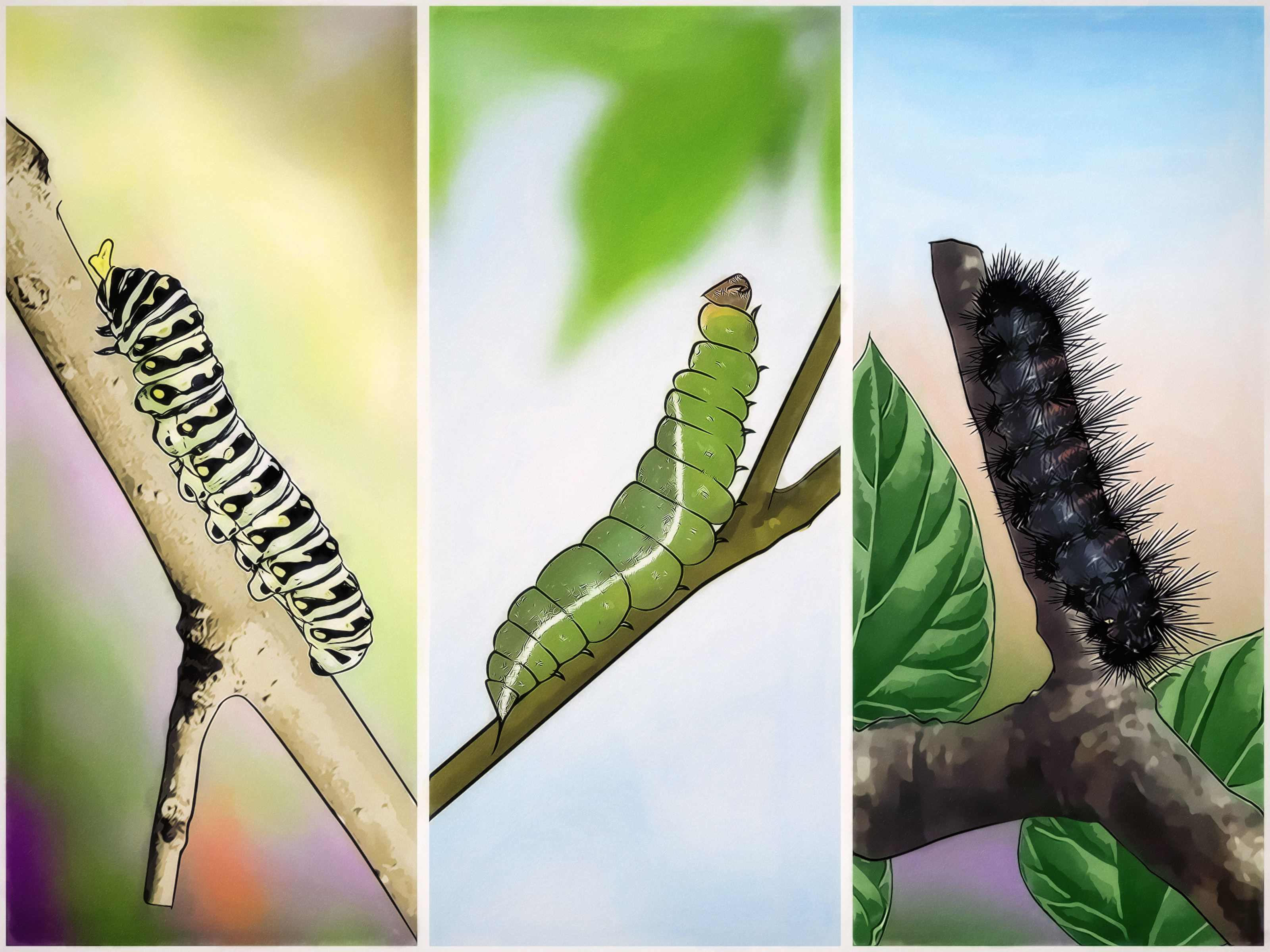 3 Ways To Get Rid Of Caterpillars WikiHow