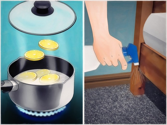 How to Get Rid of Ticks Around Your Home (with Pictures) - wikiHow