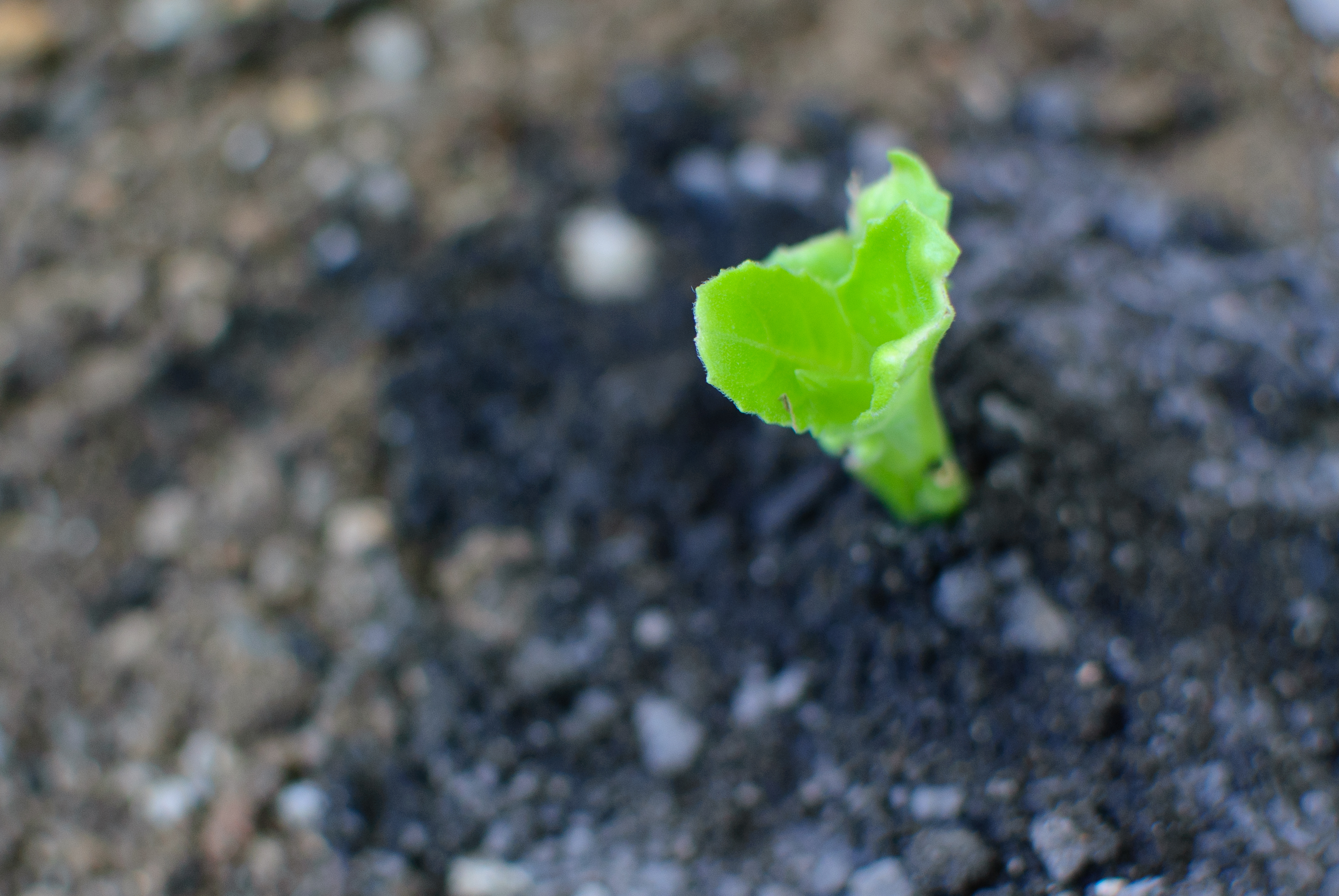 Tiny Garden Ideas