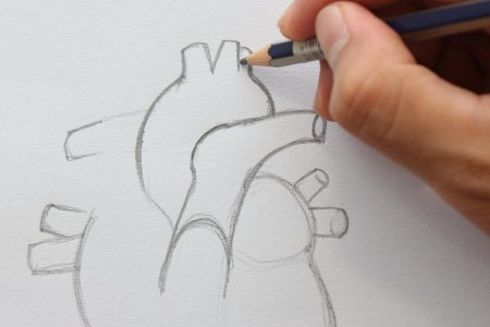 Interior human drawing easy 4k pictures 4k pictures full hq how to draw a human heart steps with pictures wikihow easy ways to draw wikihow draw it neat how to draw internal structure of human heart easy in this ccuart Image collections