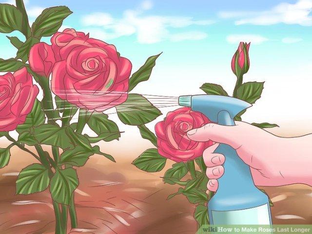 Make Roses Last Longer Step 14.jpg