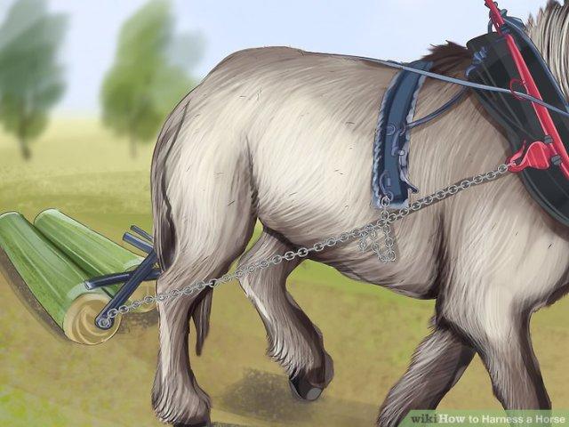 Harness a Horse Step 12 Version 4.jpg