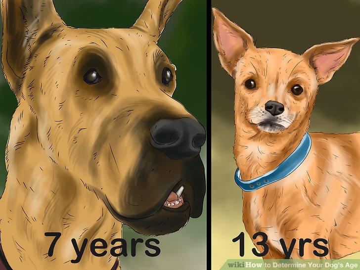 Dogs Teeth Their Aging