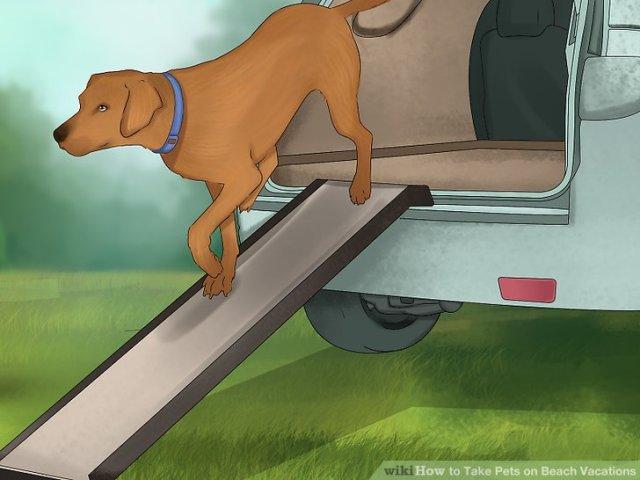 Take Pets on Beach Vacations Step 8.jpg