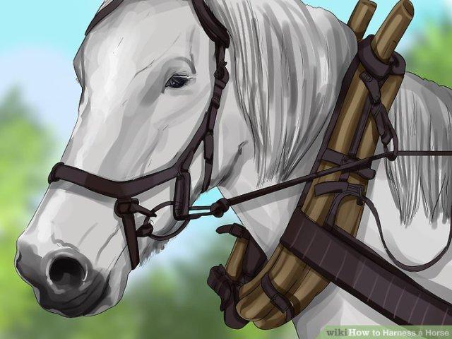 Harness a Horse Step 1 Version 5.jpg