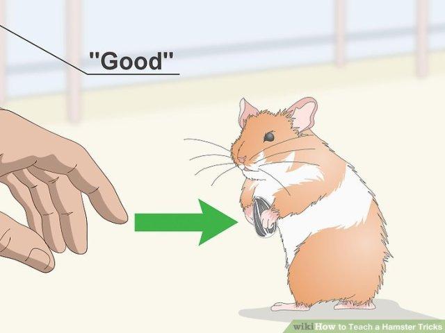 Teach a Hamster Tricks Step 4 Version 2.jpg