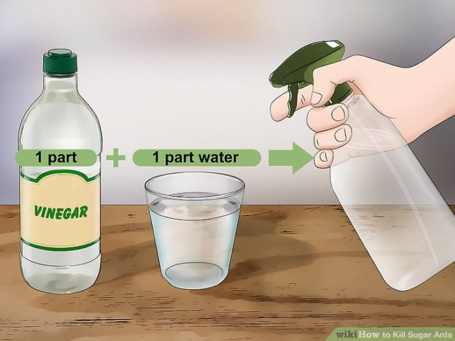 Vinegar Is Very Effective In Getting Rid Of Ants To Repel Mix Equal Amounts Water And Vinegar Either White Or Apple Cider Spray The Solution