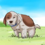 How To Potty Train A Puppy 15 Steps With Pictures Wikihow Pet