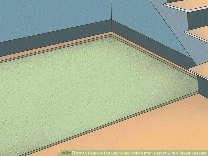 Best Carpet Steam Cleaner For Dog Urine