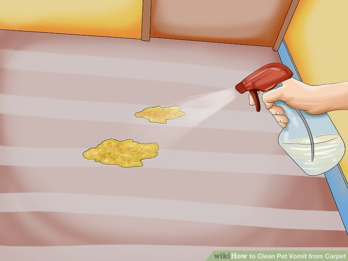 how to clean dried pet vomit from carpet. Black Bedroom Furniture Sets. Home Design Ideas