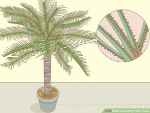 Diagram Palm Tree Trunk | Online Wiring Diagram