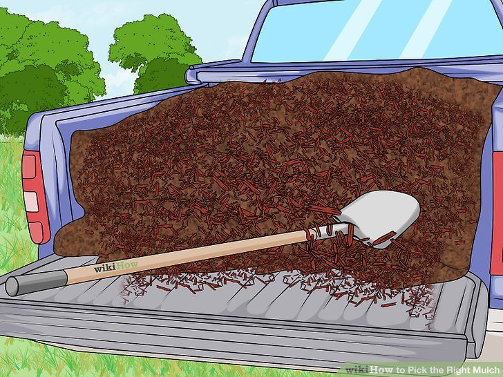 Should You Rake Leaves