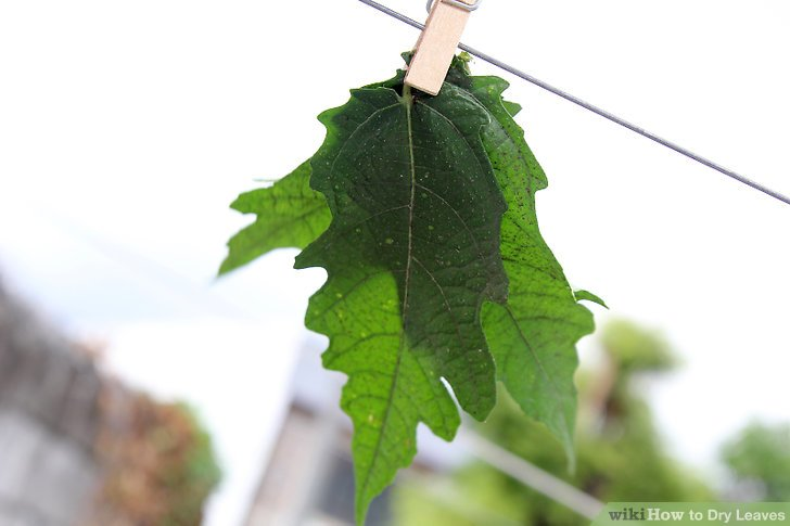 What Do Dry Leaves