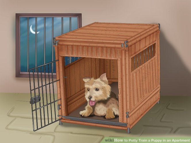 Image Led Potty Train A Puppy In An Apartment Step 8