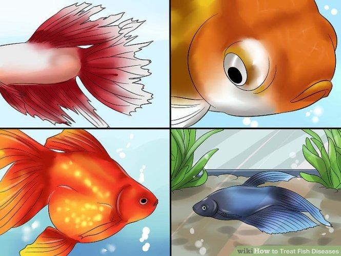 Goldfish Free From Goldfish Diseases