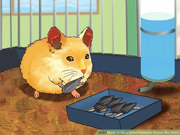 Fresh Food You Can Feed Hamsters