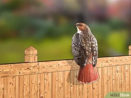 4 easy ways to keep birds away wikihow