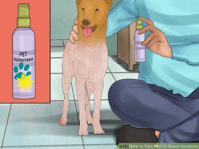 Take Pets on Beach Vacations Step 14.jpg