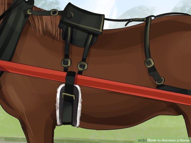 Harness a Horse Step 7 Version 5.jpg