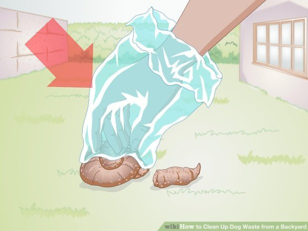how to clean cat diarrhea out of carpet