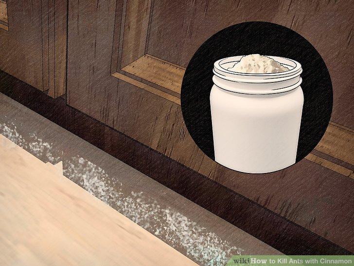 Kill Ants with Cinnamon Step 6.jpg