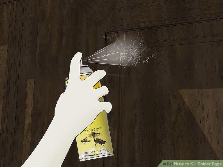 Kill Spider Eggs Step 9.jpg